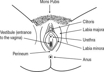 Outer VAgina